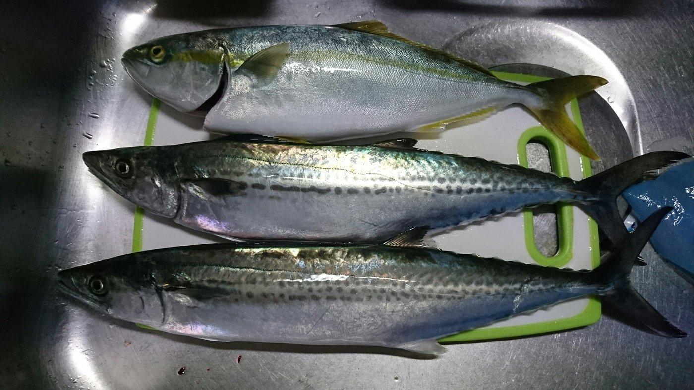 manbuさんの投稿画像,写っている魚は