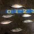 海坊主さんの熊本県天草市での釣果写真