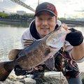 かげろうさんの高知県高知市での釣果写真