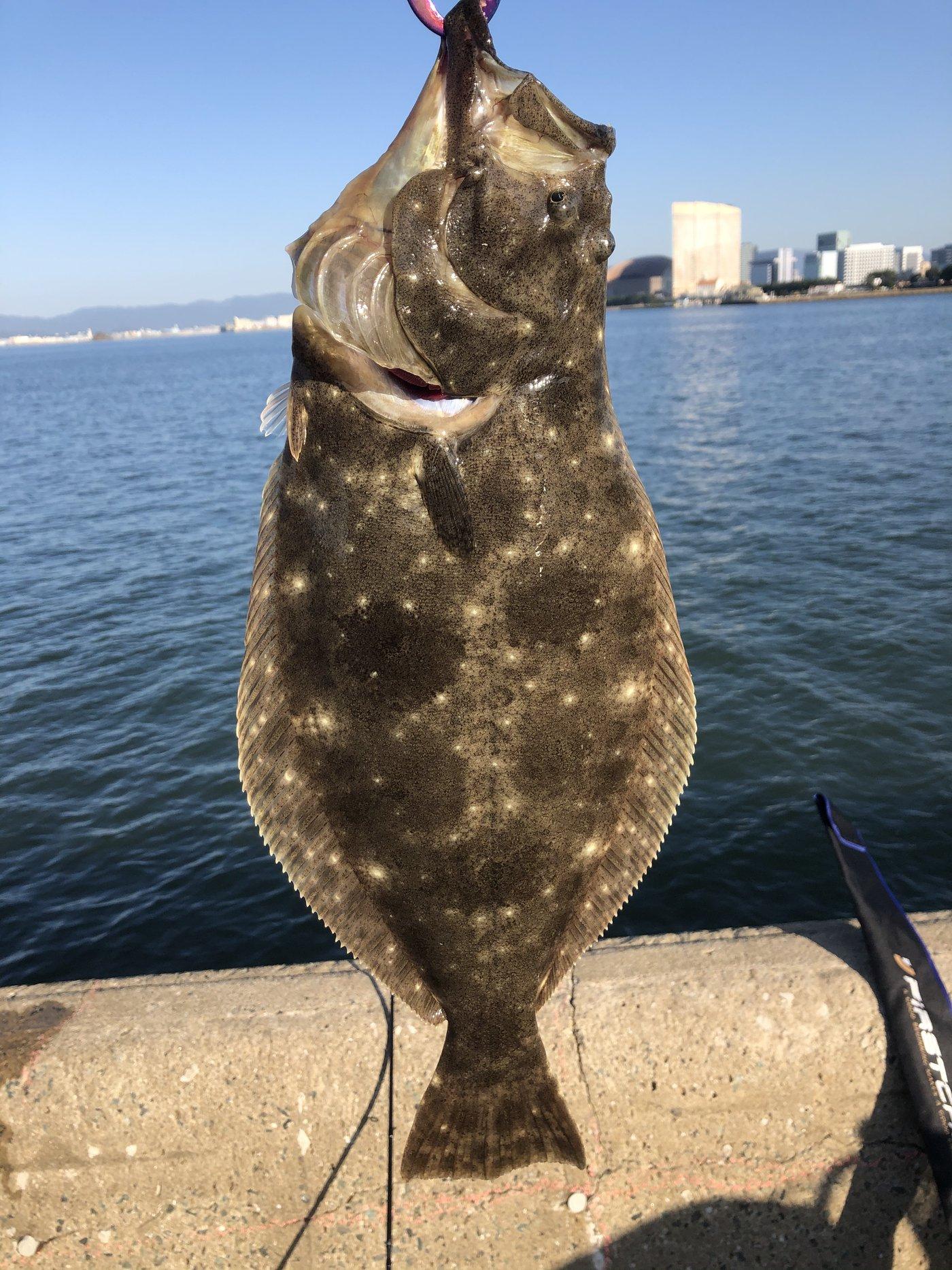 おでんさんの投稿画像,写っている魚はヒラメ