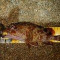 まーさー2さんの兵庫県高砂市での釣果写真
