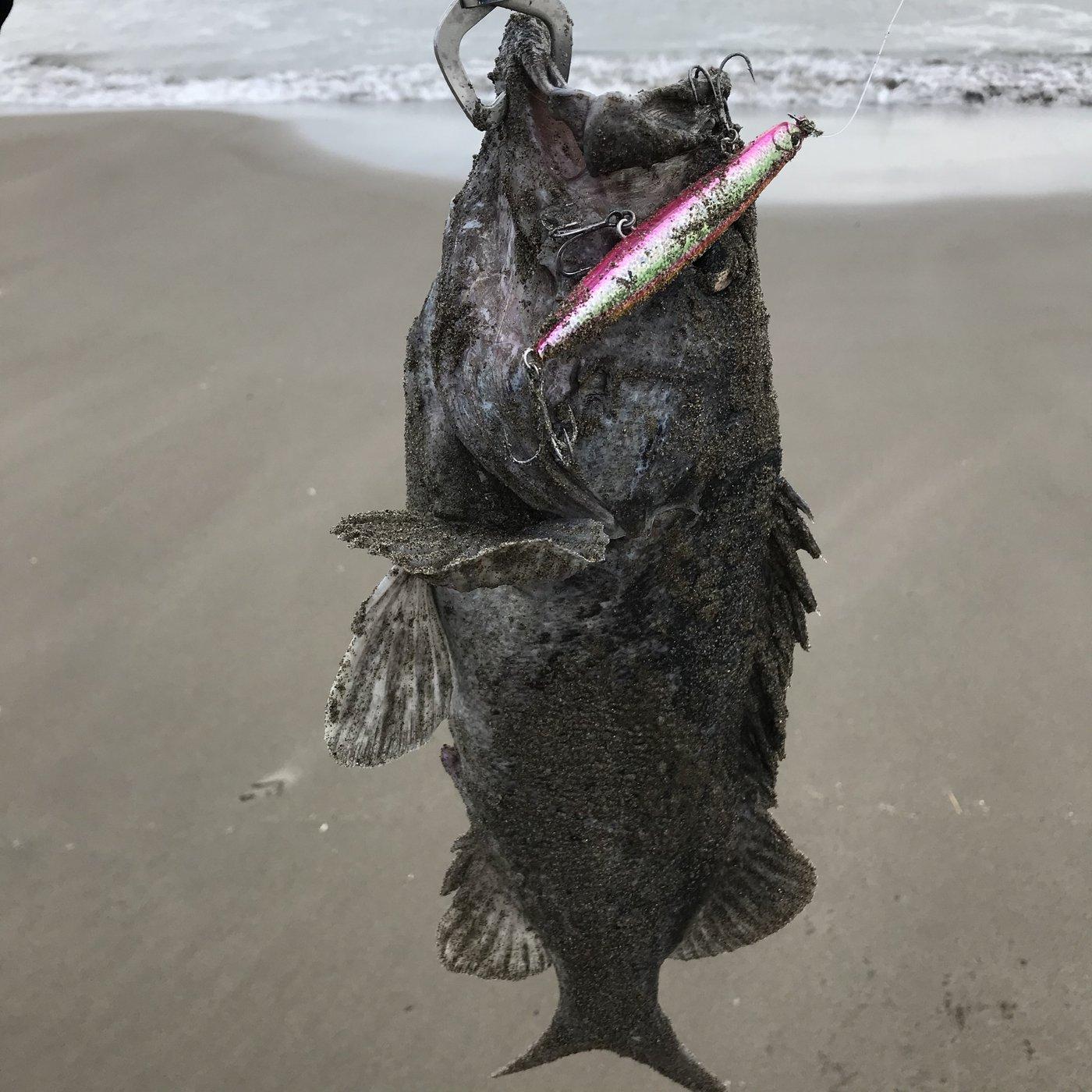 てつこさんの投稿画像,写っている魚はクロソイ