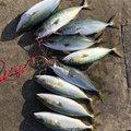 るーちゃんさんの愛知県常滑市での釣果写真