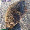 へたっぴ三ちゃんさんの宮城県でのヒラメの釣果写真