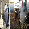 やまいだれに寿さんの千葉県千葉市でのブリの釣果写真