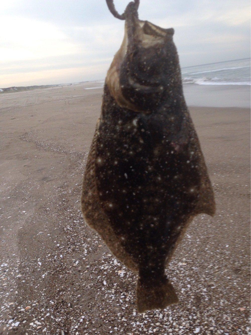 北海シマエビさんの投稿画像,写っている魚はヒラメ