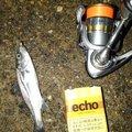 有頂天一号さんの石川県でのスズキの釣果写真