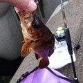 soraさんの富山県魚津市での釣果写真