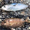 TETSUさんの静岡県沼津市での釣果写真