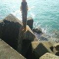 見習い釣り師さんの高知県香南市での釣果写真