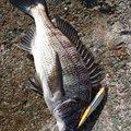 1048さんの新潟県佐渡市での釣果写真