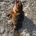 ボズビンタさんの鹿児島県垂水市での釣果写真