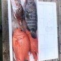 tom2さんの高知県高知市での釣果写真