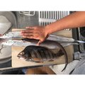 かまちゃんさんの高知県高知市での釣果写真