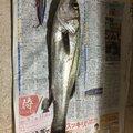 ガチャさんの鹿児島県薩摩川内市での釣果写真