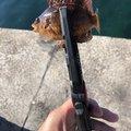 ハジメさんの愛知県名古屋市での釣果写真