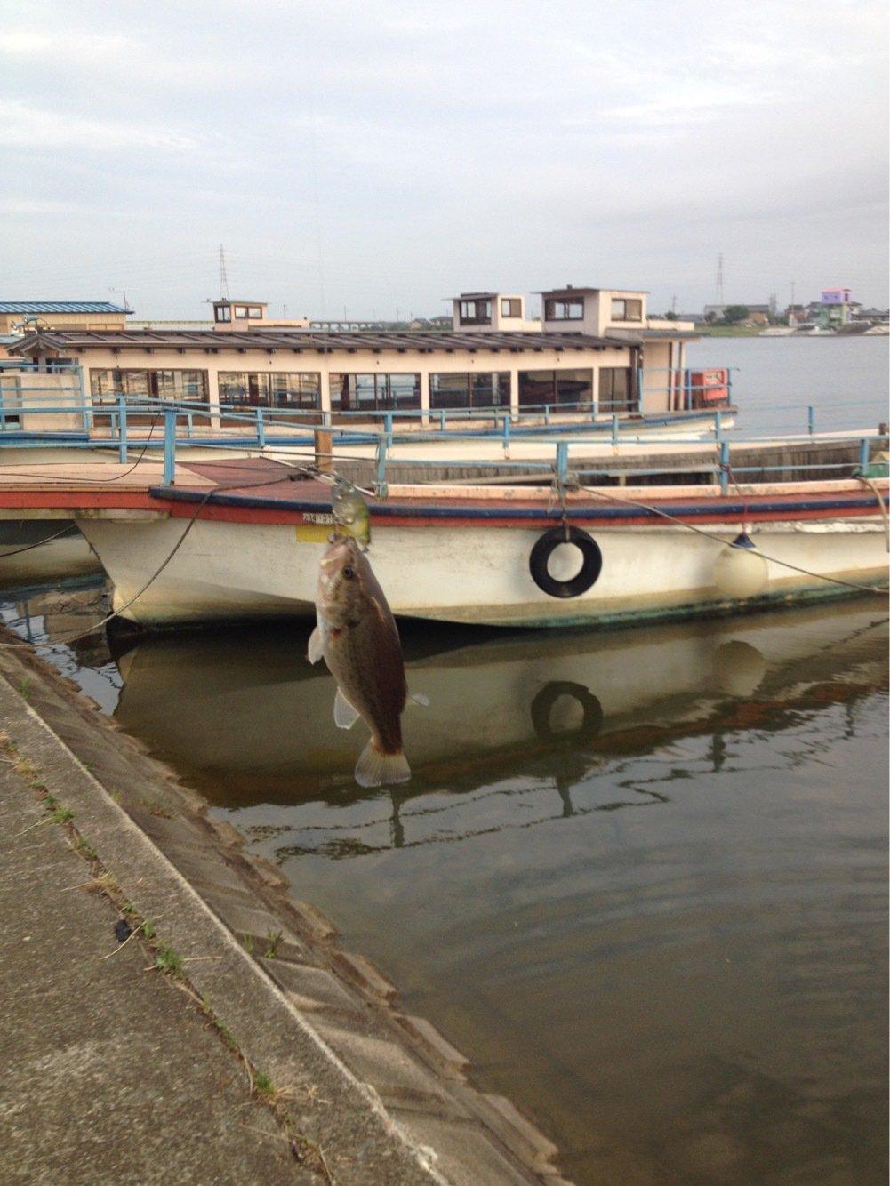 kajiさんの投稿画像,写っている魚は