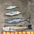 cspさんの茨城県鹿嶋市でのワラサの釣果写真