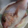 タイケンのパパさんの静岡県沼津市での釣果写真