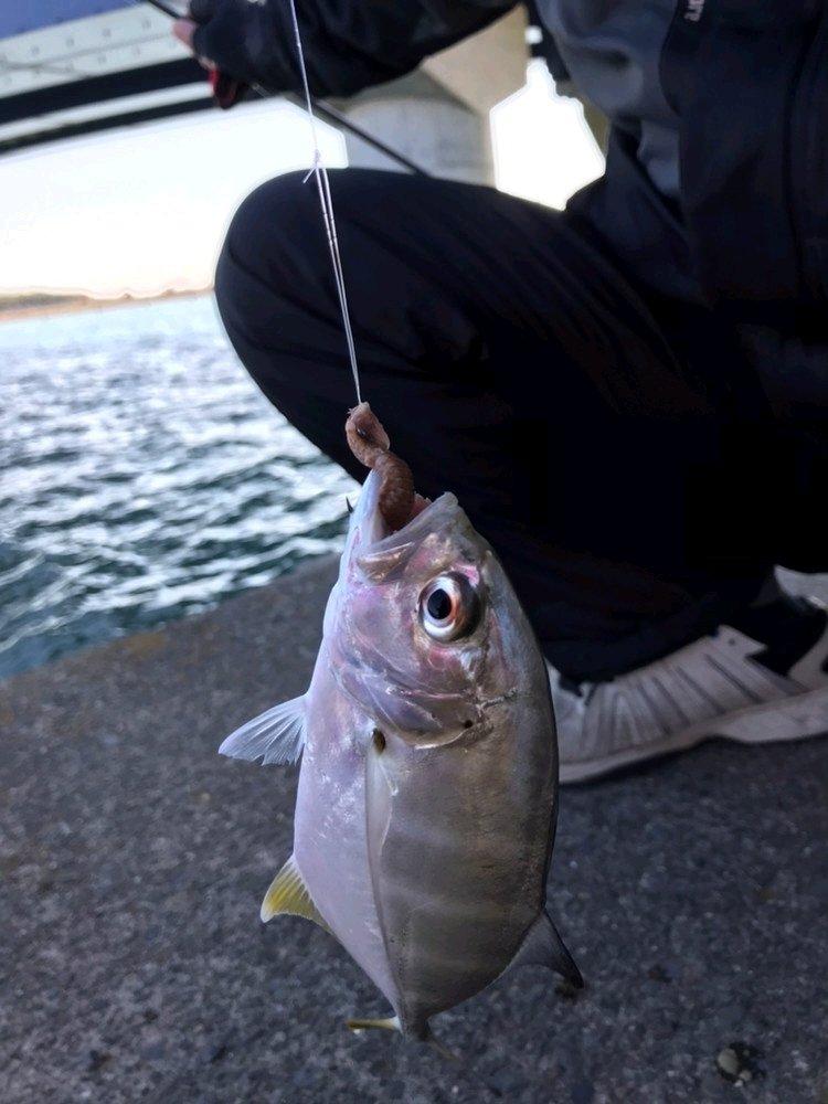 モンハンひでぽさんの投稿画像,写っている魚は