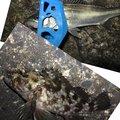 Yosukeさんのアカカサゴの釣果写真
