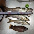 釣りたgirl❤️wさんの福島県での釣果写真