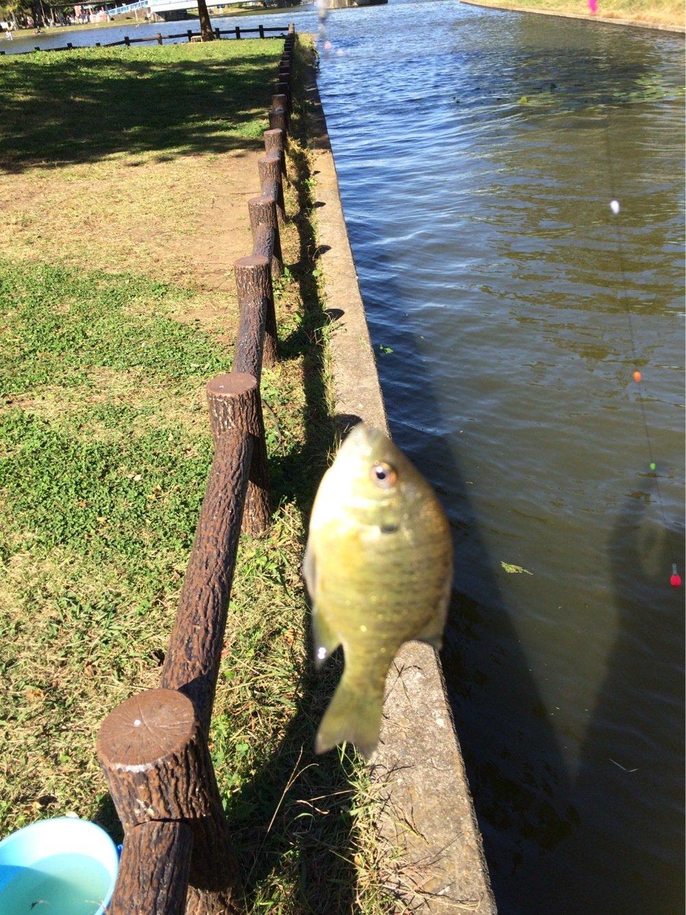 ネズエルさんの投稿画像,写っている魚は