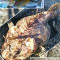 かなぼうさんのカジカの釣果写真