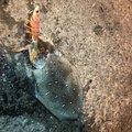 よっしーさんの熊本県でのカミナリイカの釣果写真