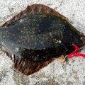go-goランプさんの北海道二海郡での釣果写真
