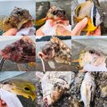 LISAさんの静岡県沼津市でのカサゴの釣果写真