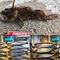 山哲さんのオニオコゼの釣果写真