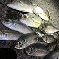 きんちゃんさんの山口県下関市でのギンガメアジの釣果写真