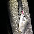ボズビンタさんの宮崎県での釣果写真