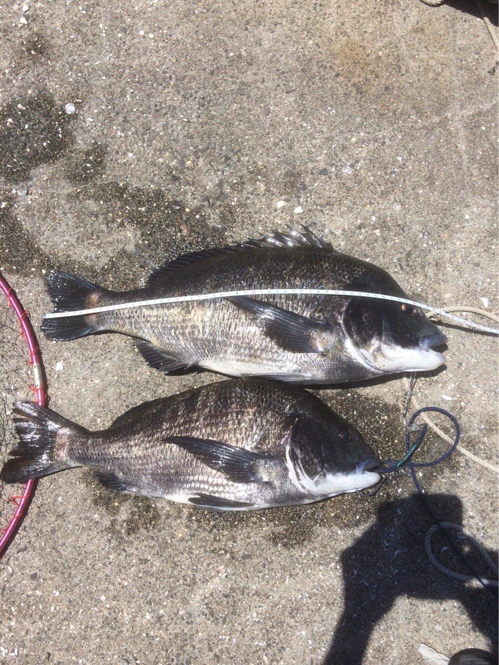海坊主さんの投稿画像,写っている魚はクロダイ