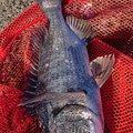 TAKAHIROさんのクロダイの釣果写真