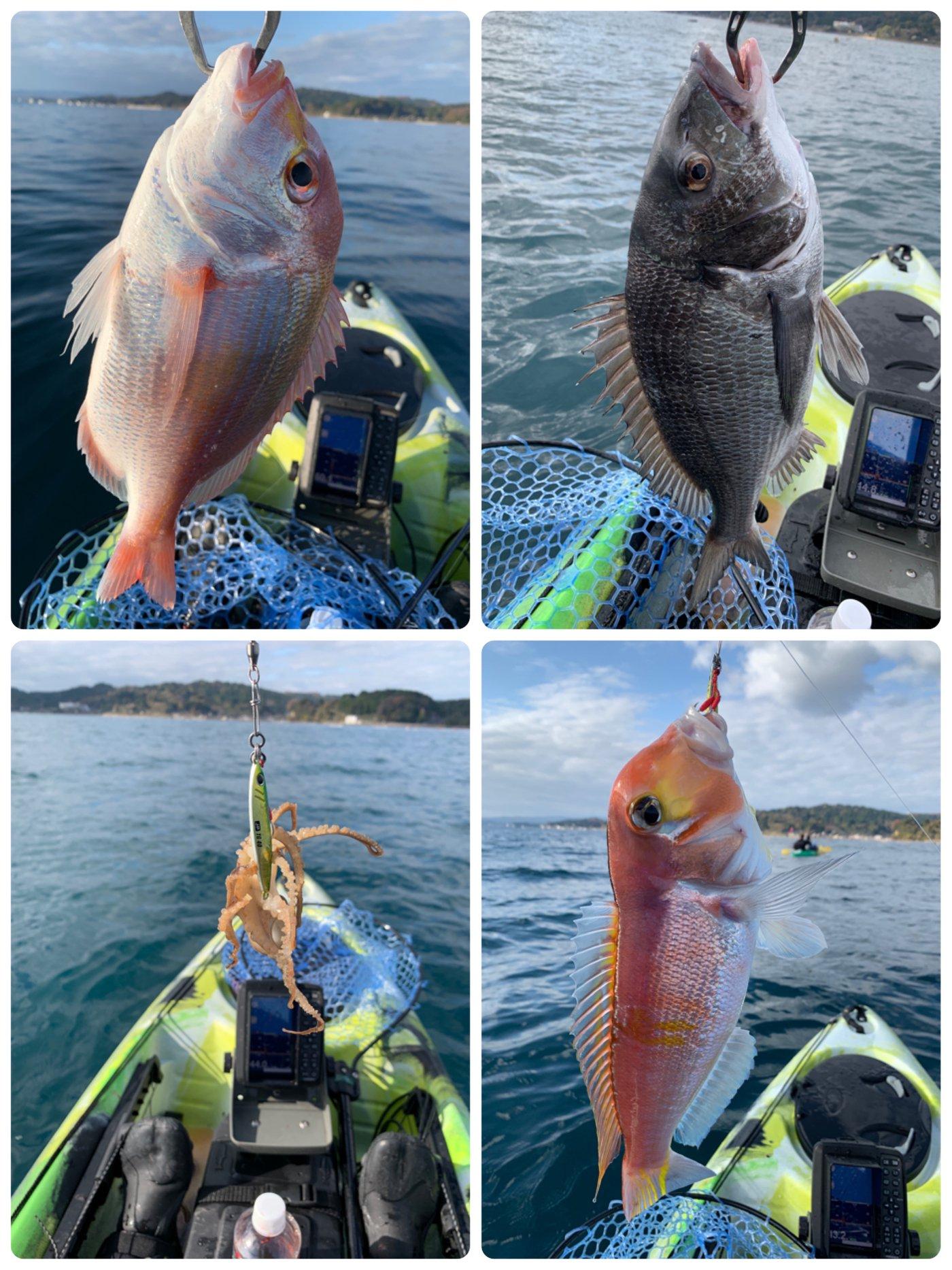 ふたちゅうさんの投稿画像,写っている魚はレンコダイ,アマダイ,クロダイ,イイダコ