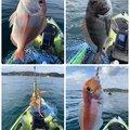 ふたちゅうさんの富山県でのイイダコの釣果写真
