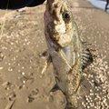 katsumi-kさんの滋賀県での釣果写真