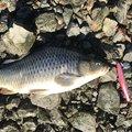 ルイージさんの愛知県名古屋市での釣果写真