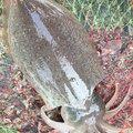 たいたいさんの山口県大島郡での釣果写真