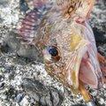 かずくんさんの高知県での釣果写真