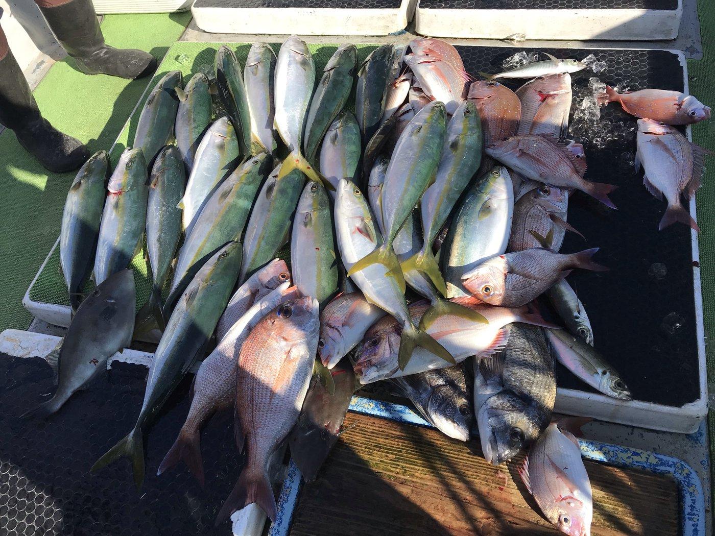 BUCCHI3さんの投稿画像,写っている魚はブリ,マダイ,カワハギ,クロダイ,アジ