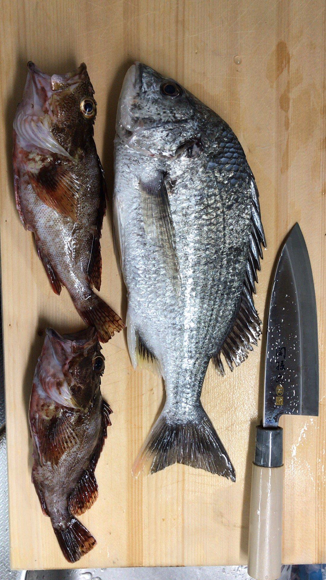Gulp!先生さんの投稿画像,写っている魚はキチヌ,カサゴ