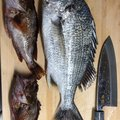 Gulp!先生さんの宮崎県での釣果写真
