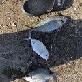 たつきさんの沖縄県での釣果写真