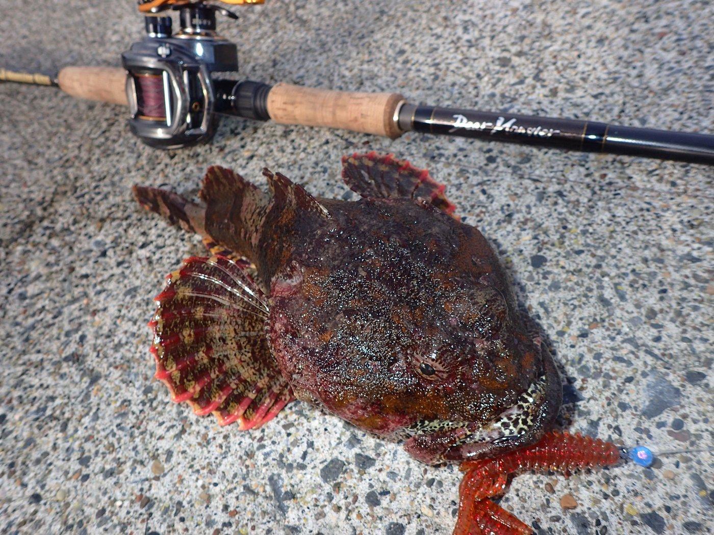Hirotoさんの投稿画像,写っている魚はカジカ
