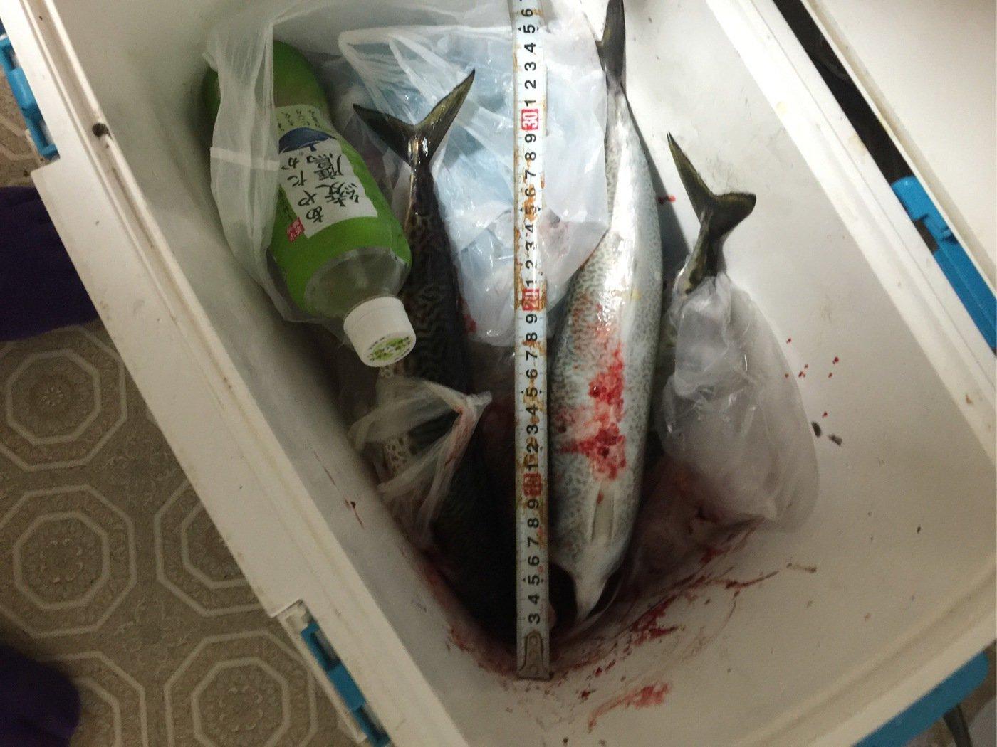 338fc bossさんの投稿画像,写っている魚はゴマサバ