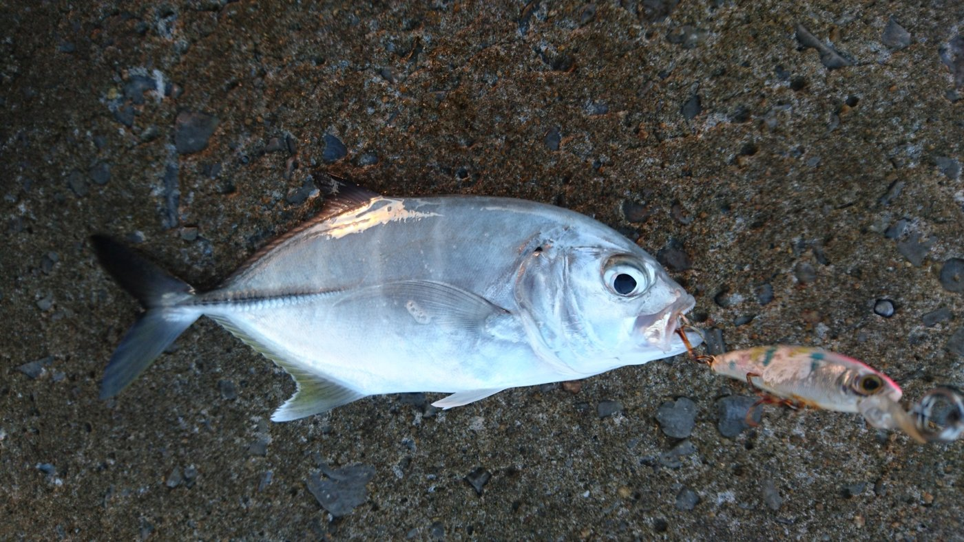ソラさんの投稿画像,写っている魚は