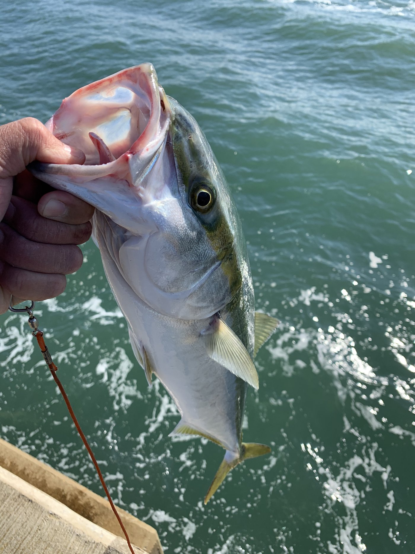Mr.NRHDさんの投稿画像,写っている魚はワラサ